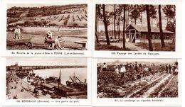 Lot De 4 Images Photos Régionales. Région Bordelaise Et Aquitaine. Les Landes, Les Vendanges, Récolte Des Prunes à Penne - Vieux Papiers