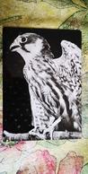Falcon - Old Postcard  Falco /  FAUCON -  1950s - Oiseaux