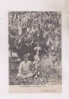 CPA DAHOMEY, UN CACAOYER - Dahomey