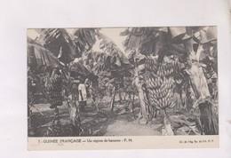CPA GUINEE FRANCAISE,UN REGIME DE BANANES - Guinée Française