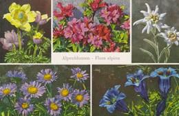 Postcard Alpenblumen Flora Alpina Edelweiss Alpenaster Enzian Flowers My Ref  B12639 - Flowers