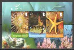 2013 Shallow Sea Research Group - Twin Issue Of Ascension, Falkland And S. Georgia MS MNH** B 75/ 48 /25 Seastar, Amenon - Gemeinschaftsausgaben