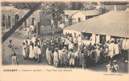 Guinée  Française / Conakry - 15 - Concours Agricole - Guinée Française