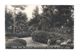 1970 Batum Batumi Botanical Garden RPPC 1930s - Géorgie