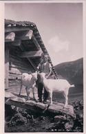 Chèvres Et Petit Chevrier Devant Le Chalet (2413) - Animaux & Faune