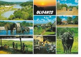 24) 9 VIEWS OF OLIFANTS, KRUGER NATION PARK, SOUTH AFRICA. - Afrique Du Sud