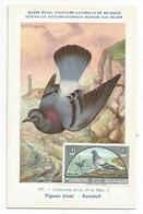 SHARJAH DEPENDENCIES  OISEAU  CARTE MAXIMUM CARD MAX 30NP 1965 - Sharjah