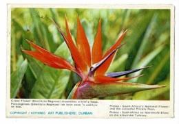 """Lettre """"South Africa's Flowers"""" Kaffirboom, Or Coral Tree, Blossom - Crane Flower"""" Circ 1971, Découpage Irrégulier - Publicités"""