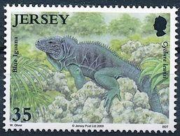"Jersey 2009: ""Blue Iguana"" (Cyclura Lewisi) Michel-No. 1398 ** MNH - START BELOW POSTAL FACE VALUE (£ 0.35) - Reptiles & Amphibians"