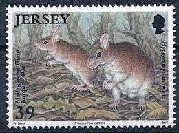 Jersey 2009: Malagasy Giant Rat (Hypogeomys Antimena) Michel-No.1400 ** MNH - START BELOW POSTAL FACE VALUE (£ 0.39) - Rodents
