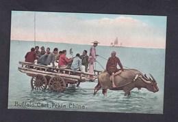 Vente Immediate Chine China Pekin Buffalo Cart ( Animée Attelage Burr Photo Co) - Chine
