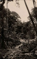 OUBANGUI-CHARI - La Forêt - Centrafricaine (République)