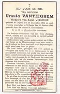 DP Ursula VanTieghem ° Tiegem Anzegem 1864 † Sint-Denijs Zwevegem 1946 X K. Versteele - Images Religieuses