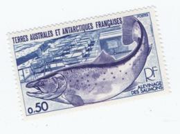 VP8L3 TAAF FSAT Antarctique Neufs°° MNH Poisson Alevinage Des Saumons 1978 N°71 - Terres Australes Et Antarctiques Françaises (TAAF)