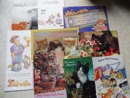 Gros Lot Chats Tous Différents 24  / Cats / Jackpot Katten Allemaal Anders - Disneyland