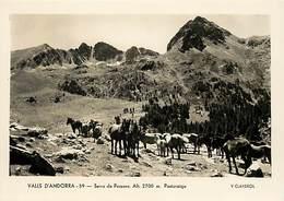 Gd Format :environ 15cms X10cms -ref Y271- Andorre - Andorra - Valls D Andorra - Serra De Pessons -chevaux - - Andorre