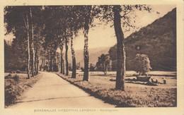 LEMBACH Birkenalle Hirschtal - Frankreich