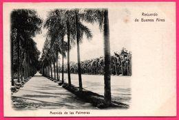 Argentina - Recuerdo De Buenos Aires - Avenida De Las Palmeras - Ed. R. ROSAUER N° 138 - Argentina