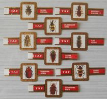 E19 Lot Bagues De Cigares  Taf   Série Insectes  9 Pièces - Cigar Bands