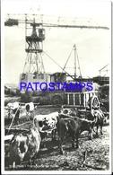 105133 ARGENTINA TUCUMAN TRANSPORTE TRANSPORTE DE CAÑA CART A COW POSTAL POSTCARD - Argentina