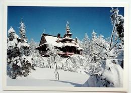 #425  Swedish Nature, Winter Landscapewith A Typical House - SWEDEN - Postcard - Suède