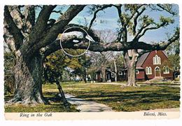 CPM : BILOXI - Ring In The Oak  - Trou Ou Anneau Dans Un Chêne - Autres