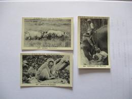 3 IMAGES CHOCOLAT DELESPAUL N°579,584,587 ASSAM RHINOCEROS,ELEPHANT AU TRAVAIL,FAMILLE DE SINGES - Vieux Papiers