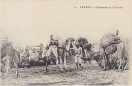 TURQUIE TURKEY  IZMIR SMYRNE    Campement De Chameaux - Turquie