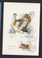 42.- SPAIN 1971 MAXIMUM CARD  Great Bustard (Otis Tarda) - Vögel