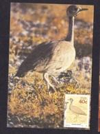44.- SOUTH AFRICA 1988 MAXIMUM CARD  Rüppell's Korhaan Also Known As Rüppell's Bustard (Eupodotis Rueppellii) - Vögel