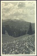 SLOVENIA - KARAVANKE + žigi KOČA -1950 - Slovénie