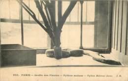 75 - PARIS - JARDIN DES PLANTES - PYTHON MOLURE - Parcs, Jardins