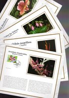 """"""" ORCHIDEES """" Sur 4 Feuillets CEF N°tés En SOIE De 2005 N° 1756s à 1759s N° YT 3763 à 3766 Parf état FDC - Orchidées"""