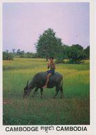 00746 - CAMBODGE - THE BOY WITH BUFFLES - Cambodia