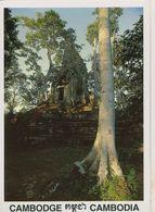 00749 - CAMBODGE - SIEM REAP - PRASAT PREAH PALILAY - Cambodia