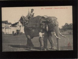 Cambodge éléphant Préféré Du Roi édit. Dieulefils N° 1812 - Cambodia