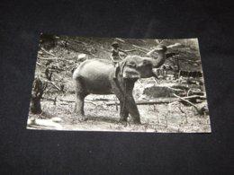 Ceylon Tame Elephant Clearing Jungle__(20313) - Sri Lanka (Ceylon)