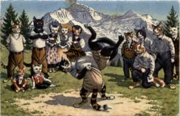 Katzen - Schwingen - Animaux Habillés
