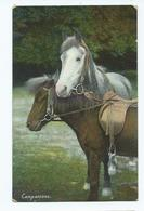 Horse And Pony Companions Used Posted 1908 Wildt And Kray No 1094 - Horses