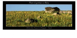 AUBRAC LOZERE - PRAIRIE DE GENTIANES EN AUBRAC - Photographs