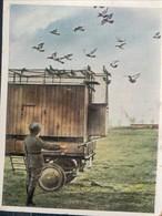 Chromo Eckstein Halpaus Die Deutsche Wehrmacht Weltkrieg Oorlog Guerre (1914-18) Nr 105 Fahrbarer Brieftaubenschlag Duif - Zigaretten