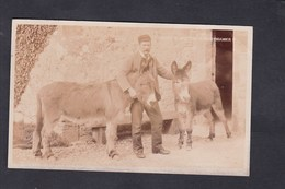 UK Jacob & Ned The Water Drawer ( Carte Photo F.N. Broderick Ryde Isle Of Wight Ane Porteur D'eau ) - Angleterre