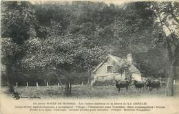 FORÊT DE MORMAL - Les Vaches Laitières De La Ferme De La Chênaie. - Andere Gemeenten