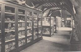 ANTWERPEN /MUSEUM STEEN / VOORWERPEN GEVONDEN IN DE SCHELDE - Antwerpen