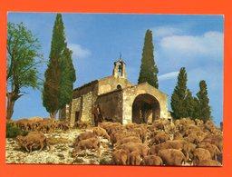 PL/20 EN PROVENCE SYMPHONIE PASTORALE // église Chapelle Moutons Mouton Clocher Berger - France