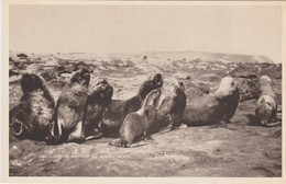 FALKLAND ISLANDS  ISLAS MALVINAS - Postcards