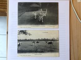 2 Postkaarten, 's-Gravenwezel Herten En Koeien, Gelopen 1905, Zegel 1 Cent Nr, 53 - Schilde