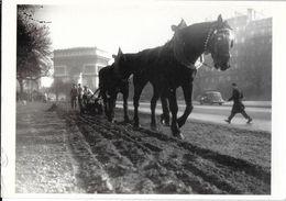 CPM PHOTOGRAPHIE  LABOURAGE AVENUE FOCH PARIS 75 AV61 GENDRE EDIT. CARLTON CARDS FRANCE ATTELAGE CHEVAL - Photographs