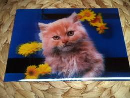 Katze Cat Chat  Lenticular 3D Postkarte Postcard - Chats