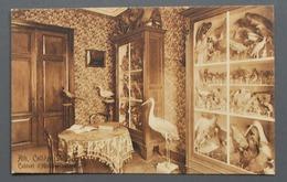 Ath - Collège Saint-Julien - Cabinet D'Histoire Naturelle - Ed. De Tulp, Haarlem - 1911 - Ath